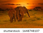 Elephants And Sunset In The...