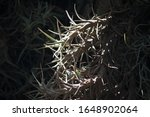 Sunlight On Grey Epiphyte Plant ...