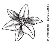 lily flower drawn in a stamp... | Shutterstock .eps vector #1649962567