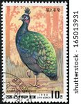 Small photo of NORTH KOREA - CIRCA 1990: A stamp printed in DPR Korea shows a Congo peacock(afropavo congensis), circa 1990