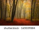 Fairytale Foggy Forest For...