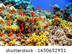 Small photo of Underwater coral fish shoal view