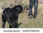 soft focus labrador dog with... | Shutterstock . vector #1650748594