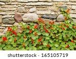 Blossoming Nasturtiums Against...
