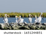 White Pelicans Sitting Atop Rip ...