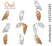 Illustration Of A Barn Owl With ...