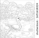 Big Wild Goose Swimming Among...