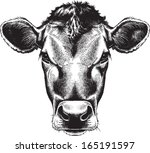 black and white sketch of a cow'... | Shutterstock .eps vector #165191597