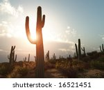 A Desert With Cactus In Arizona