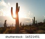 A Desert With Cactus In Arizona
