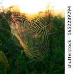 Spider And Its Web In The...
