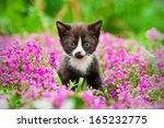 Stock photo little black kitten sitting in flowers 165232775