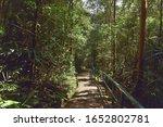The Dense Tropical Rain Forest...