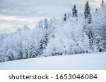 Hoar Frost Covered Forest In...