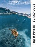 Small photo of Sea Turtle split shot, Ningaloo reef, Western Australia