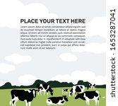 A Herd Of Holstein Friesian...
