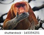 Highly Endangered Proboscis...