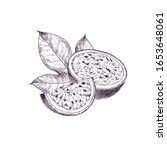 hand drawn passion fruit. set... | Shutterstock .eps vector #1653648061