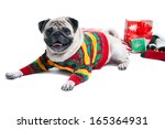 Funny  Cute And Playful Pug Do...