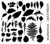black various forest leaves set.... | Shutterstock .eps vector #1653748654