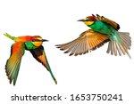 Birds Of Paradise Feathers...