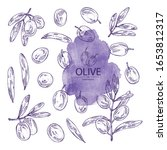 collection of olive  olives and ... | Shutterstock .eps vector #1653812317