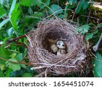 Small photo of Quail eggs in the wild. Natural quail nest. Progeny. Spring concept. Bird's nest nature background.