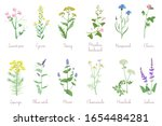 wild herbs set with names... | Shutterstock .eps vector #1654484281