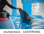 funny dolphins in the dolphinarium catch in the blue pool and feed them with buckets of fish