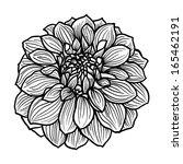 hand drawn dahlia flower. black ... | Shutterstock .eps vector #165462191