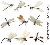 Stock photo set of damselfly and dragonfly isolated on white 16546528