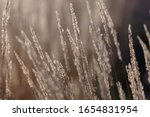 Dry Autumn Grasses With...