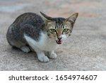 portrait cute cat on street   Shutterstock . vector #1654974607