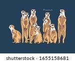 Vector Illustration Of Meerkat  ...