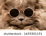 Cat Face In Round Glasses....