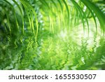 Green Palm Leaf Reflects In...