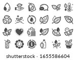 plants icons. mint leaf ... | Shutterstock . vector #1655586604