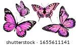 Beautiful Pink Butterfly...
