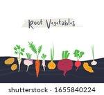 root vegetables garden hand... | Shutterstock .eps vector #1655840224