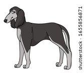 cute cartoon saluki dog breed...   Shutterstock .eps vector #1655856871