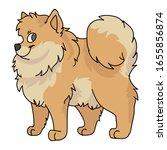 cute cartoon pomeranian dog...   Shutterstock .eps vector #1655856874
