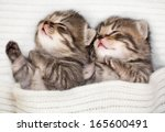 Stock photo two sleeping baby kitten 165600491