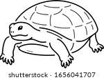 Gopher Tortoise. Florida State...