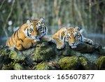 tiger   Shutterstock . vector #165607877