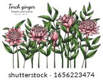 pink torch ginger flower and...   Shutterstock .eps vector #1656223474