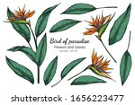 set of bird of paradise flower... | Shutterstock .eps vector #1656223477