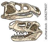 Carnivore Dinosars Skulls Line...
