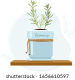rosemary or anthos evergreen... | Shutterstock .eps vector #1656610597