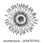 sunflower in line art style. | Shutterstock .eps vector #1656707551