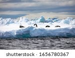 Group Of Penguins Rest On...